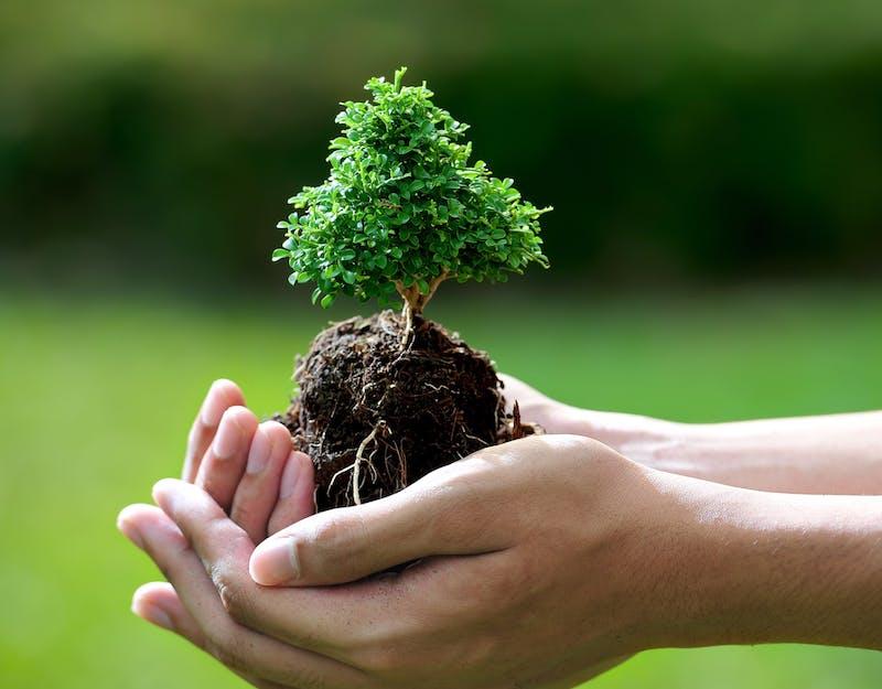 Wspieramy ochronę środowiska!